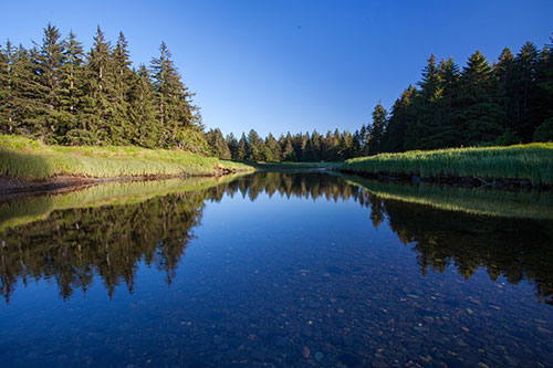 Nature Trust of BC Salmon River Estuary on Vancouver Is