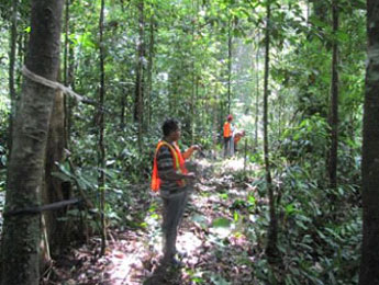 Biologists conducting a survey along a transect